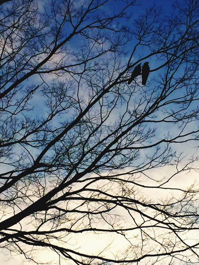 Lovebirds Yoyogi Park Sundaywalk Sunday Tree Shadow