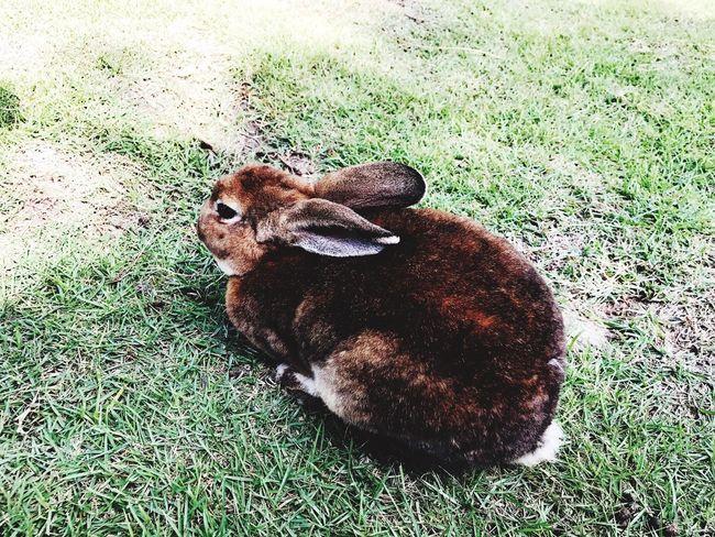 One Animal Outdoors rabbit