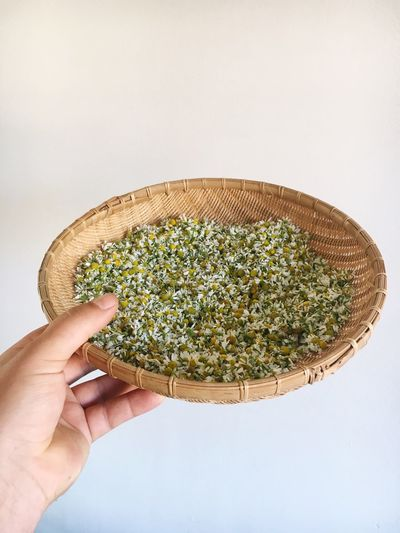 Human Hand White Background Human Body Part Studio Shot One Person Indoors  Real People Holding Close-up Food Freshness Day People Healing Herbs Herbs Herb Kamille Kamillenblüten Plant Plants EyeEm Selects