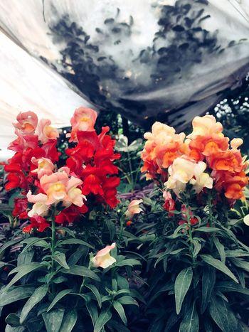 Las flores más hermosas del Jardín Hello World Chiapasiónate Nature Nature_collection I Love It ❤