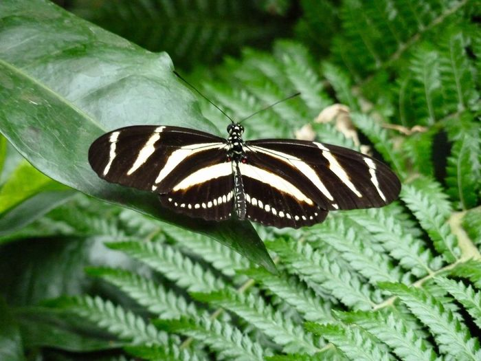 Butterfly Whipsnade Zoo Insect Animals In The Wild Animal Themes Butterfly - Insect One Animal Animal Wing Animal Wildlife Leaf Green Color Close-up Wildlife Animal Markings No People Outdoors Nature Day Plant Beauty In Nature Spread Wings