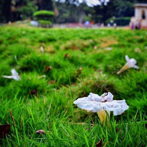 Life is like a flower OSHOMoment Magicpict Colorsoftime Bangalore lalbagh life solitude instagram incredible_india instamood lifeisbeautifultravel holidays