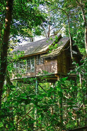 woodhouse Architecture Architecture ASIA Borneo Building Built Structure Green Color House Malaysia Nature Sarawak Sarawak Cultural Village Tree Woodhouse