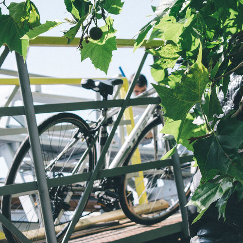 Close-up of bicycle wheel against trees