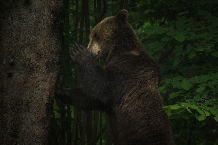 Bear by tree trunk
