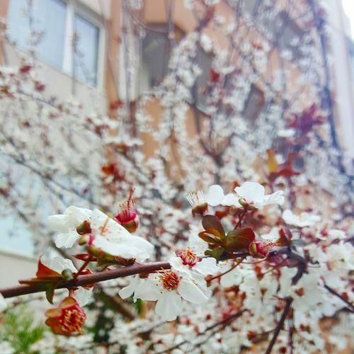 Showcase March Spring Flowers Spring Is Coming  Flowers, Nature And Beauty Yalancı Bahar Yalancıbaharınyalançiçeği False Spring Earlyspring