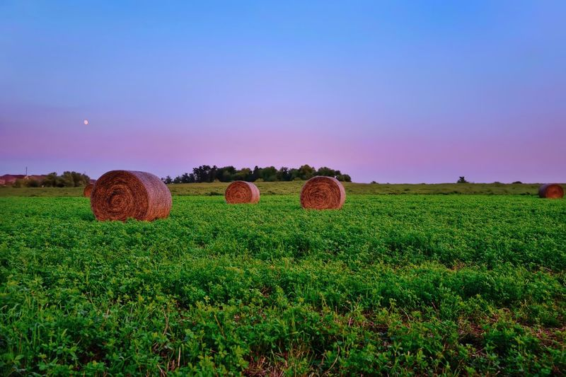 Green Color Dusk In The Country Dusk Sky Dusk Colours Dusk Sky Hay Bale Field Land Plant Landscape Agriculture Green Color Growth Beauty In Nature Nature Rural Scene Tranquility Scenics - Nature Tranquil Scene Hay Environment