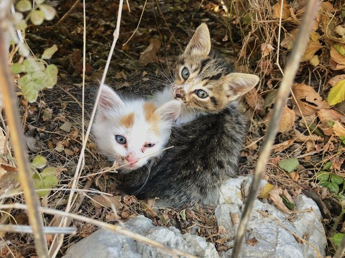 Wild Kittens on the Greek Island, Rhodes Animal Themes Vertebrate Domestic Animals Mammal Nature Outdoors Group Of Animals Domestic High Angle View Feline Domestic Cat No People Day Looking At Camera Land Portrait Field First Eyeem Photo
