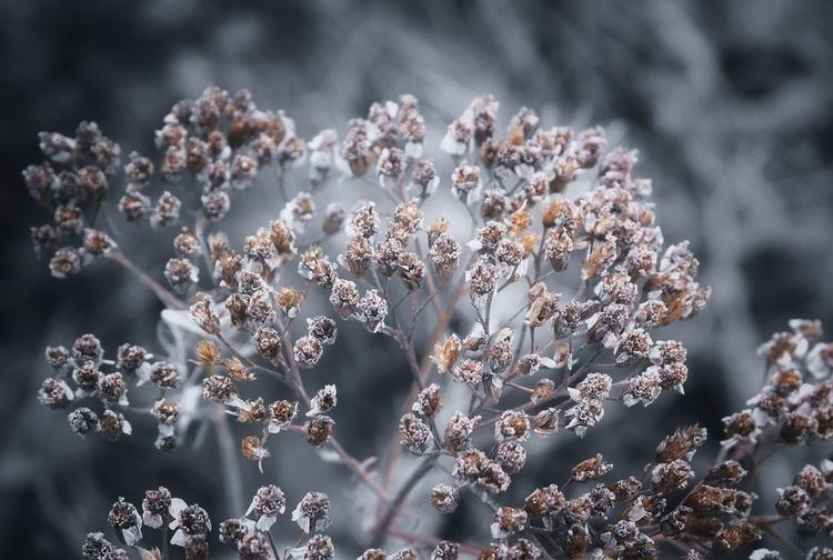 Getty Images Autumn Ural EyeEm Selects Flower Snowflake Flower Head Close-up Growing Fragility Lichen Pollen Petal Flowering Plant In Bloom Lavender Plant Life Dandelion Stamen Blooming Bud Dahlia Single Flower Osteospermum Cosmos Flower Sunflower Passion Flower Hibiscus EyeEmNewHere
