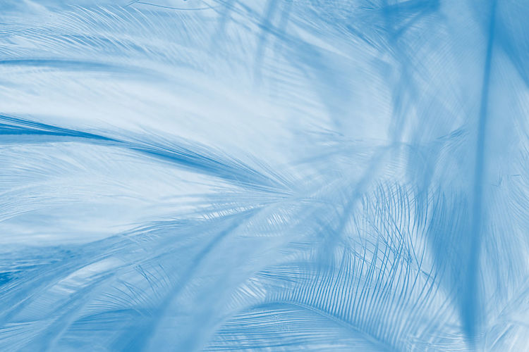 Abstract Abstract Backgrounds Backgrounds Blue Close-up Extreme Close-up Feather  Fragility Full Frame Indoors  Lightweight Macro Nature No People Pattern Softness Textured  Vulnerability  Water White Color