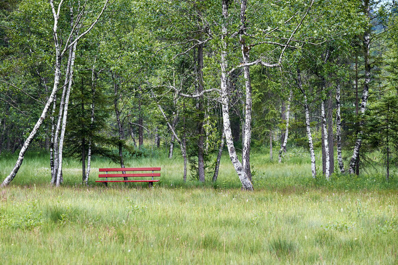 In Nature Plant Tree Land Nature Grass Trunk Tree Trunk Growth Green Color Forest Day Field Tranquility No People Bench Non-urban Scene Outdoors Tranquil Scene Seat Beauty In Nature Park Bench
