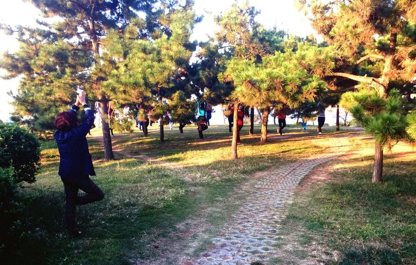 Trees. Yoga Pose Park Tree Pose Qingdao Seaside Walk