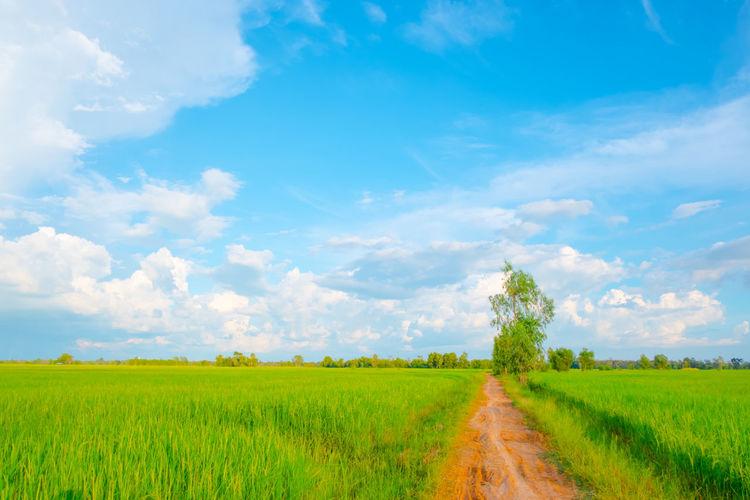 Beautiful field
