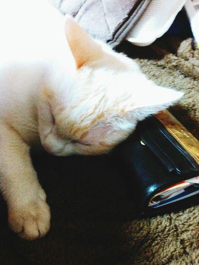財布を枕にいびきかいてます