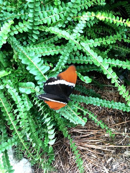 Butterfly Green Color Plant Growth Leaf Nature One Animal Animal Themes Animals In The Wild Day Outdoors No People Beauty In Nature Close-up