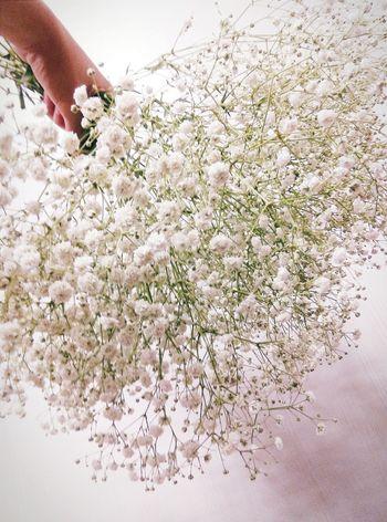 Taking Photos Flowers#nature#hangingout#takingphotos#colors#hello Worldflorafauna F Kaohsiung