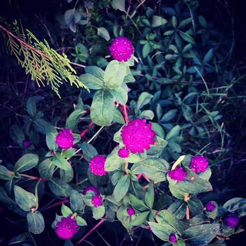 Flowers Flower Plant Purple Palet Violet