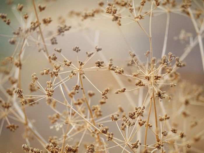 Pattern No People Backgrounds Nature Floral Pattern Close-up Snowflake Full Frame Indoors  Vulnerability  Textile Beauty In Nature Fragility Plant Day Holiday Celebration