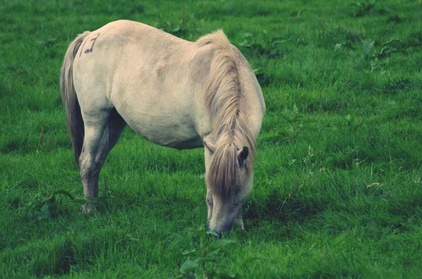 Animals Jeju JEJU ISLAND  Horse