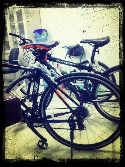 自行车的世界