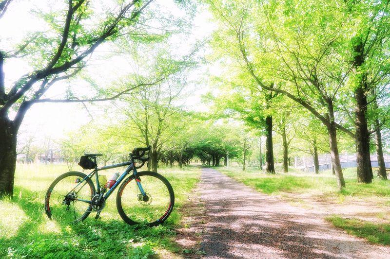 サイクリング ロードバイク 自転車 新緑 木 森 太陽 光 春 道路 林道 Cycling Bicycle Green Color Tree Forest Sun Sunbeam Spring Springtime EyeEm Nature Lover EyeEm EyeEm Best Shots 写真好き 写真好きな人と繋がりたい