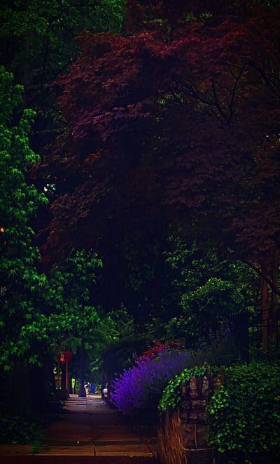 Washington DC Washington, D. C. Taking Photos Eyem Taking Pictures Around Me Eyem Best Shot WashingtonDC Eyem Best Shots Nature_collection My City My City Is Beautiful Eyem Best Edits Capitol Hill Flowers The Street Photographer My Streets Walking Around Check This Out Hanging Out Eyemnaturelover Eyembestshots Garden Flowers Sidewalk Sidewalk Photograhy Sidewalks