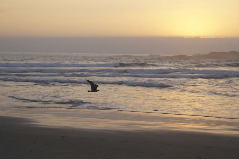 Seagull Flying At Beach Against Sky During Sunset