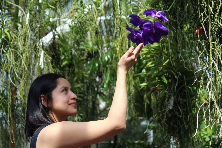Orchid Blossoms Plant One Person Flower Women Flowering Plant Nature Growth Freshness