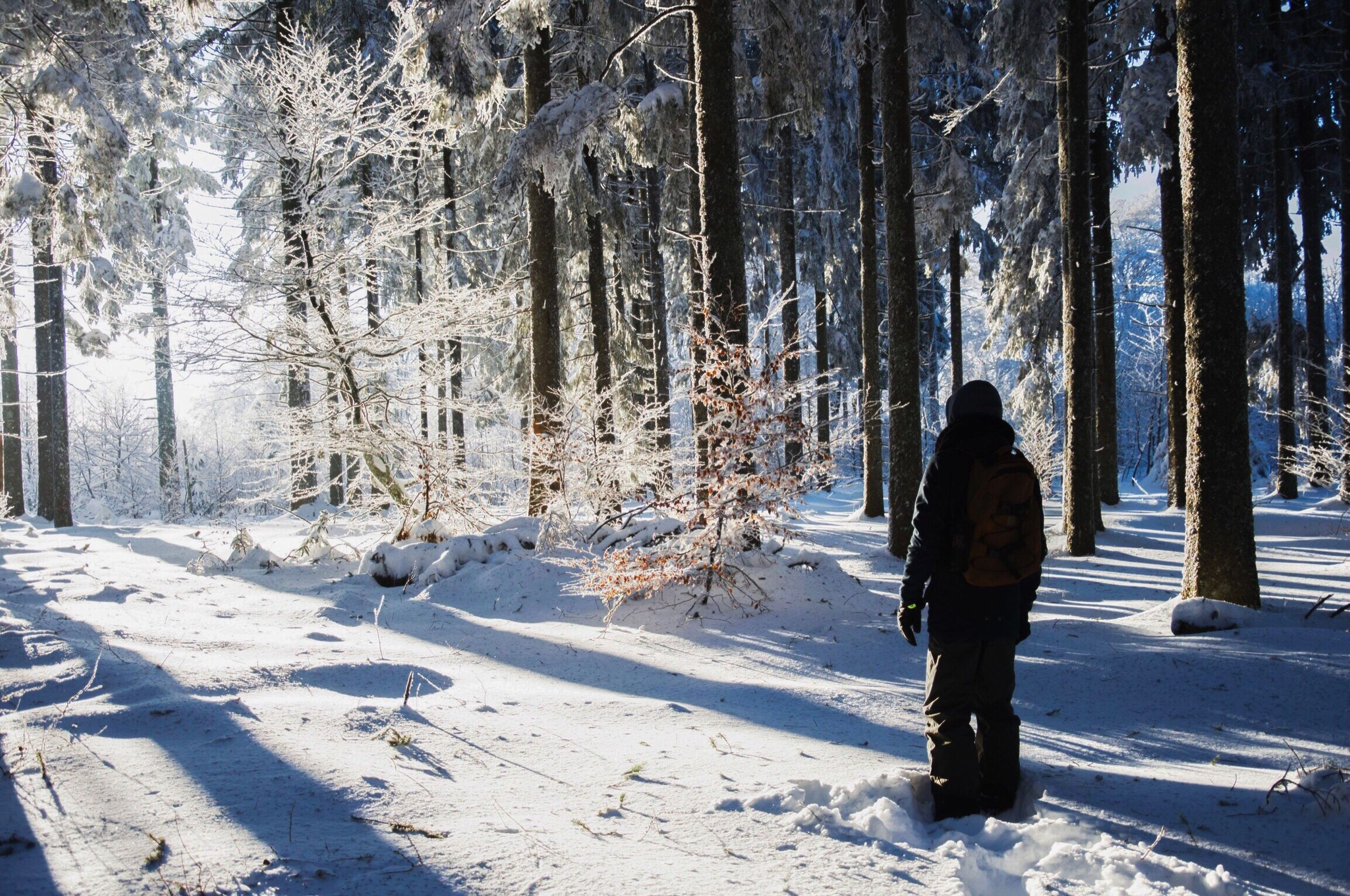 winter, snow, cold temperature, tree, nature, real people, one person, outdoors, beauty in nature, tree trunk, warm clothing, day, landscape, only men, people, adults only, adult