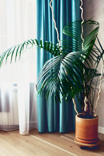 A large, beautiful fern flower in a pot on the living room floor by the window.