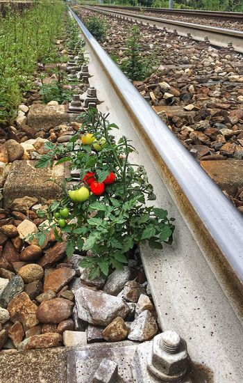 Plant Nature Day Growth No People High Angle View Track Railroad Track Flower Transportation