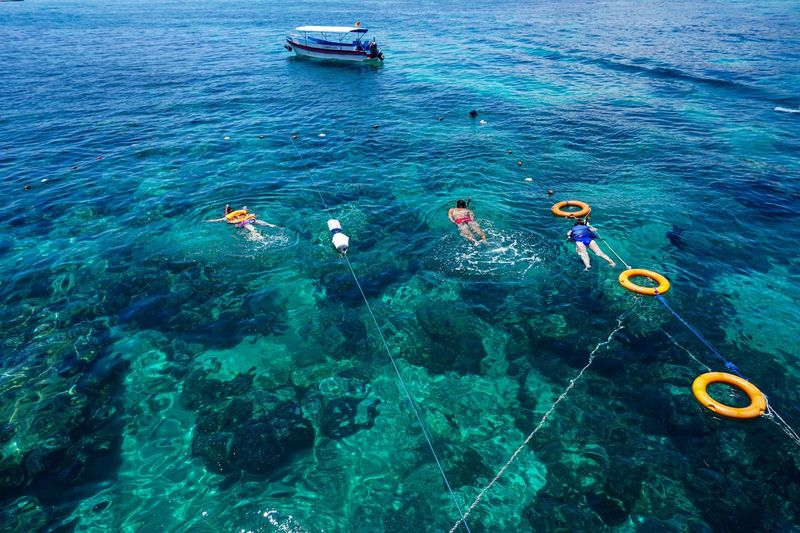 The Great Outdoors With Adobe Snorkeling Reef Clear Water Swimming The Great Outdoors - 2016 EyeEm Awards The Essence Of Summer People Of The Oceans