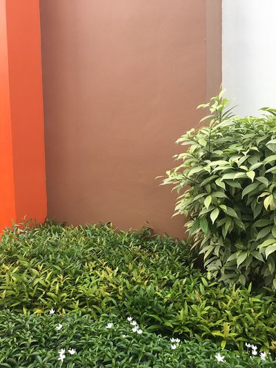 Eyeem Philippines Growth Plant Leaf Green Color No People Day Nature Outdoors Close-up Architecture Freshness