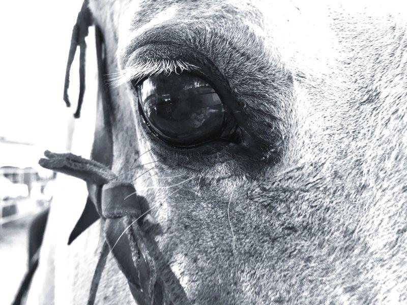 Horse Life Horse Eye Black & White