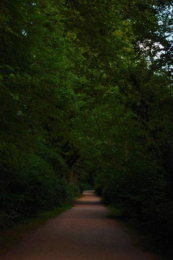 The walk Tree Green Color Landscape Treelined