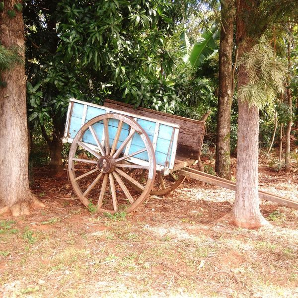 Traditional Oxcart Paraguay Carretas