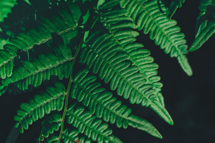 Travel Traveling Bali Bali, Indonesia Thailand Summer Nature Outdoors Leaf Plant Part Green Color Growth Plant No People Beauty In Nature Day Fern Close-up Focus On Foreground Natural Pattern Tranquility Tree Pattern Leaf Vein Selective Focus Green Leaves