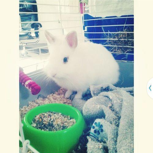 Mon petit doudou ?? Hello World French F4F Lapin Rabbits 🐇 Baby Good Day Animals