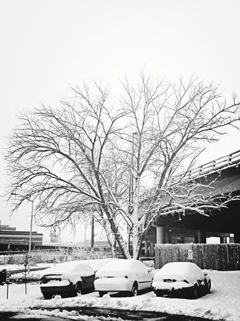 Gotta love spring time in Missouri! EE_Daily: Black And White Sunday KCe Landscape_Collection KC Through KCe