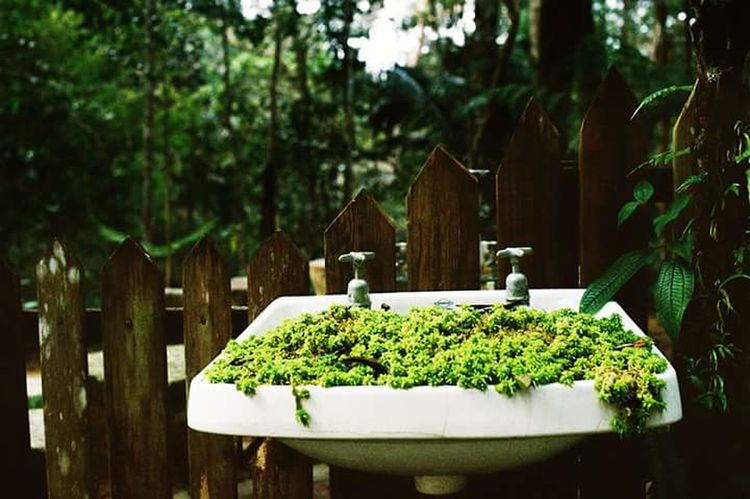 A sink full... Outdoors Nature 35mm Fujifilm NikonFM2 Film 35mmfilmphotography EyeEmNewHere 35mm Film Abstract