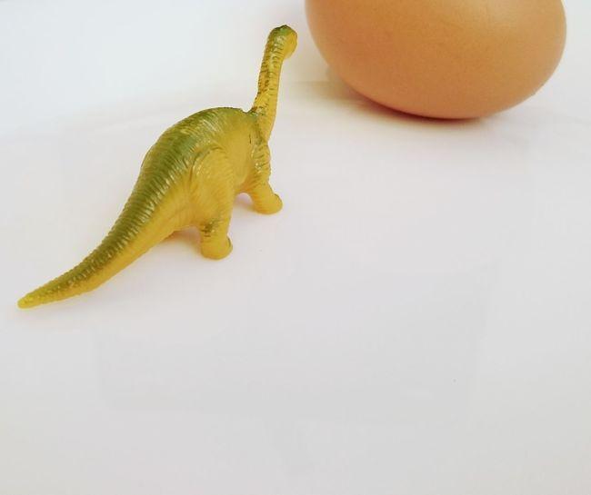 mini Dinosaur model with egg Egg Chicken Egg Dinosaur Model One Animal Studio Shot Indoors  No People White Background Animal Themes Close-up
