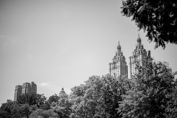 ©Amy Boyle Photography Central Park Central Park - NYC Green Color New York City Skyline Architecture Building Exterior Built Structure Day Nature_collection No People Outdoors Sky Tree