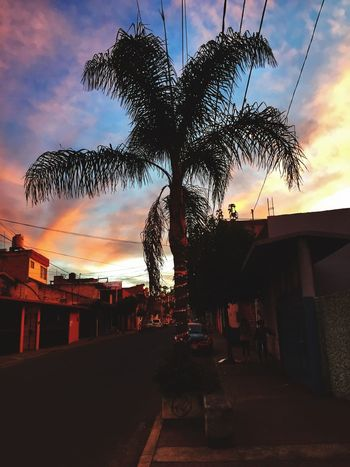Palm Tree Tree Sky Sunset Cloud - Sky Silhouette Architecture Built Structure Building Exterior Outdoors No People Beauty In Nature Nature Day