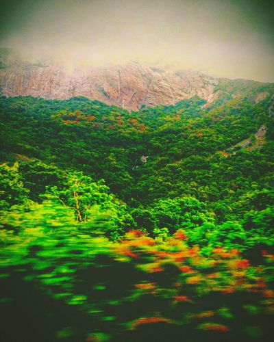 Streams geeting green Green Color Landscape Nature Scenics Beauty In Nature Mountain Rural Scene Multi Colored Freshness Outdoors Sky Day Tree Streams EyeEm Nature Lover