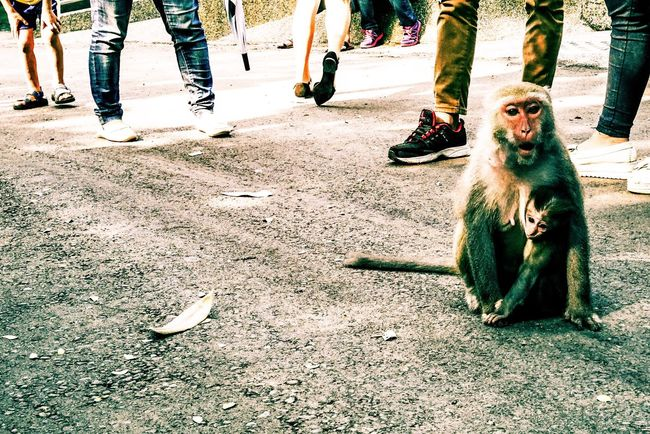 Monkey Mom Children Animals People Street Streetphotography Cute Warm Hanging Out Life EyeEm EyeEm Best Shots EyeEm Gallery EyeEm Best Edits EyeEmBestPics From My Point Of View Enjoying Life Relaxing Traveling