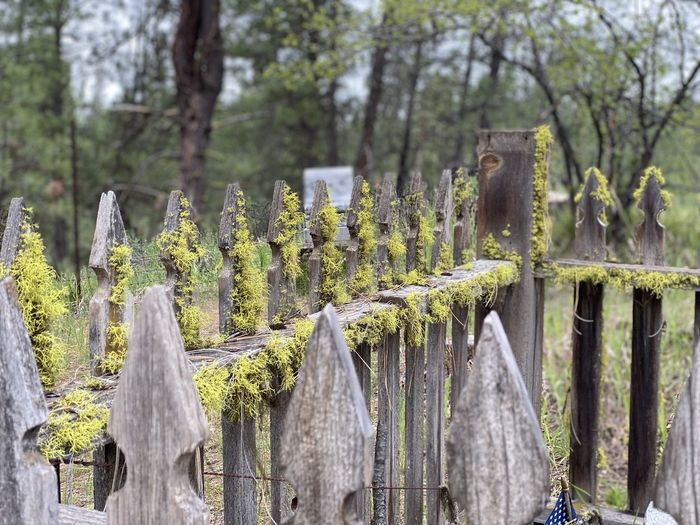 Panoramic shot of wooden fence amidst trees