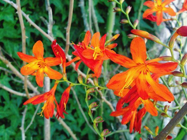Beaty Flower Nature_collection EyeEm Gallery Orange Green Contrast First Eyeem Photo Nature Harmony Now