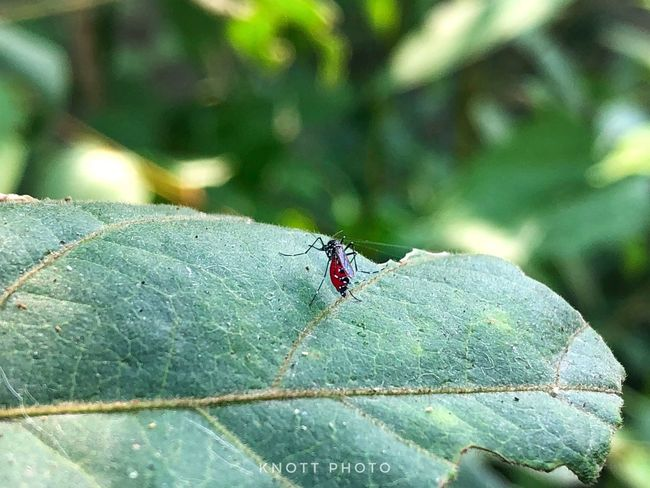 Insect Invertebrate Animals In The Wild Animal Wildlife Animal Themes Animal One Animal Plant Part Leaf Close-up Beetle No People Green Color Day Focus On Foreground Nature Animal Wing Fly Ant Ladybug