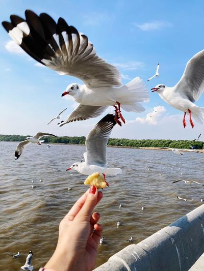 Low angle view of seagulls flying against the sky