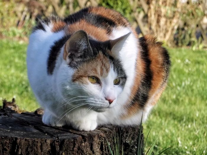 Close-up of cat on tree stump in park